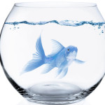 blue fish in bowl